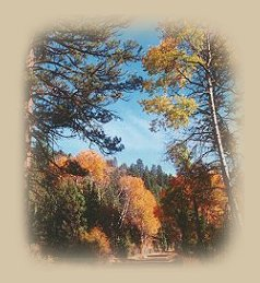 autumn at gathering light ... a retreat - tree houses, treehouses, the cottage, cabins on the river in the forest located in southern oregon near crater lake national park and klamath basin birding trails.